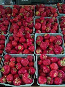 starwberries2