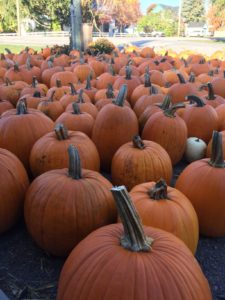 As many pumpkins as you can carry only $10!